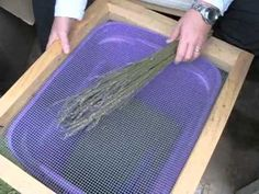 In this video from October Phil shows us how to debud lavender. The variety of lavender that Phil is debudding in this video is Grosso, a lavandin (. Lavender Wands, Lavender Crafts, Lavender Wreath, Lavender Garden, Lavender Sachets, Lavender Scent, French Lavender, Lavender Blue, Lavender Fields