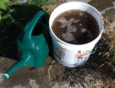 """Magical Compost Tea---put a quart (4 cups) of compost in a 5 gallon bucket and fill that bucket with water. Let the bucket sit overnight so that the compost can """"steep"""" into the water, thus the name compost """"tea."""" After that, transfer the compost tea to a watering can and water your plants as you would with any other liquid fertilizer"""