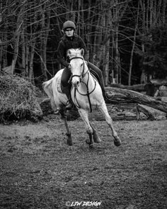 Equestrian Style, Horses, Photography, Animals, Instagram, Photograph, Animales, Animaux, Fotografie