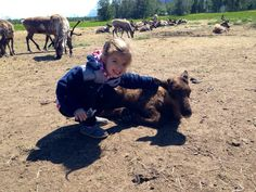 Fun Things for Families in and around Anchorage Alaska