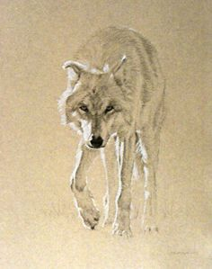 Timothy David Mayhew - Frontal Study of an Approaching Gray Wolf