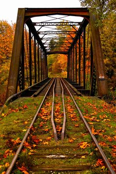 Rail bridge, Vermont - Autumn leaves - forest railroad pathway