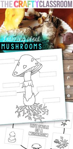 Mushrooms Pop up in the Fall!  Print out this 8 page set of mushroom science printables including charts, worksheets, coloring pages, labeling, life cycle and more! Free! http://thecraftyclassroom.com/2015/10/24/mushroom-science-printables/