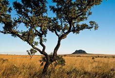 Árvores retorcidas, capinzais, chapadões: a Serra Geral do Tocantins decifra a natureza do Cerrado