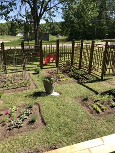 Veggie beds laid out and planted Deer Resistant Garden, Fenced Vegetable Garden, Front Yards, Garden Projects, Gates, Beds, Layout, Outdoor Structures, Plants