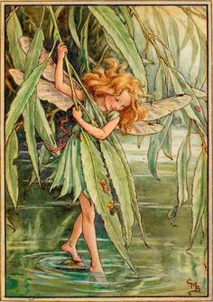 By the peaceful stream or the shady pool I dip my leaves in the water cool. Over the water I lean all day, Where the sticklebacks and the minnows play. I dance, I dance, when the breezes blow, And dip my toes in the stream below.