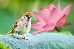 Fotografía Little Cutie por Sue Hsu en 500px