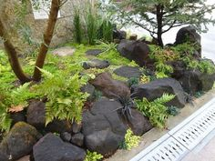 Love the color, size, and placement. Japanese Garden Backyard, Small Japanese Garden, Terrace Garden, Creative Landscape, Landscape Design, Zen Garden Design, Drought Tolerant Landscape, Landscape Plans, Modern Landscaping