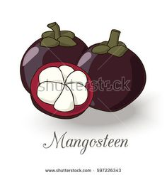 Picture of mangosteen exotic fruit.Bright fruit and leave on the white background.