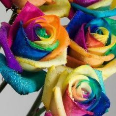 Rainbow roses!  Accent Flowers & Gifts in Waterford, MI is the BEST florist in Oakland county for SO many reasons!  Call (248) 461-6941 or visit our website www.aaflowershop.com to see what we are all about and to place your order!