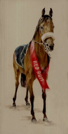 red rum horse - Google Search