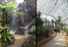 Plant pavillion. Left: Stunning waterfall and Tree Ferns. Right: Visitors experiencing the meandering pathways within the Qingdao Plant Pavilion. Credit: Weddle Landscape Design