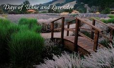 Wine AND Lavender at Matanzas Creek in Sonoma. Heavenly combo.