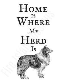 Home is Where My Herd is Print Collie Wall Art Collie Breed