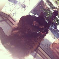 hoje foi dia de banho, bb!  #blackcat #blackcatsofinstagram #catstagram #catsofinstagram #caturday