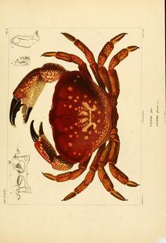 T.9 - Voyage dans l'Amérique Méridionale - Biodiversity Heritage Libraryhttp://biodiversitylibrary.org/page/14544593. #WorldOceansDay