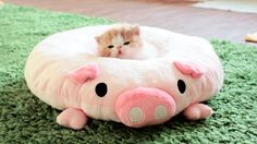 23 Excruciatingly Adorable Things To Look At Before The SATs