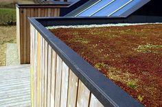 Fachada de madera y techo verde de bajo mantenimiento.