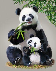 Photo from album Татьяна Доронина on View album on Yandex. Wild Animals Pictures, Animal Pictures, Baby Elephant Images, Image Panda, Panda Mignon, Baby Panda Bears, Baby Pandas, Red Pandas, Panda Painting