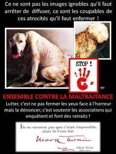 tellement plus facile de maltraiter un animal  , c'est de la pure lâcheté !!