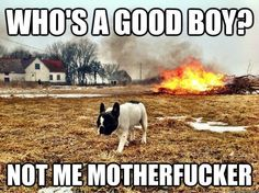 What my dog must think when he shits on the carpet and then walks away.