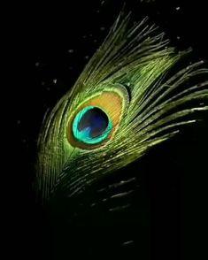 feather Art Print by mark ashkenazi - X-Small Arte Krishna, Radha Krishna Songs, Krishna Flute, Krishna Gif, Krishna Statue, Radha Krishna Pictures, Radha Krishna Photo, Lord Krishna Images, Radha Krishna Paintings