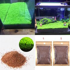 Details about Lots Aquarium Plant Seeds Aquatic Double Leaf Carpet Water Grass Fish Tank Decor