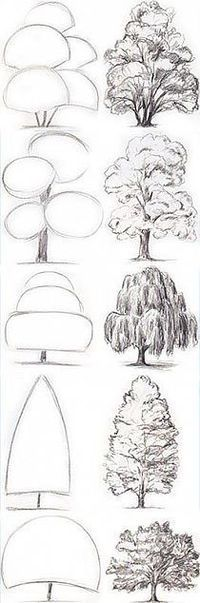 Tree Drawing Tutorial. Start with basic geometric shapes.