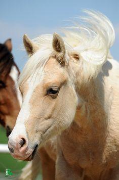 Shooting Star | Verkaufspferde