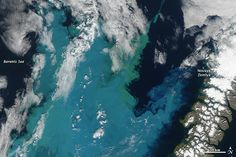 Arctic food chain in trouble Credit: NASA Earth Observatory Arctic ice melt has lead to additional phytoplankton blooms and researchers are unsure how this will effect the Arctic ecosystems.  [Full Story: Climate Change Scrambles Arctic Food Chain]