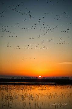 Sunrise at Merced National Wildlife Reserve