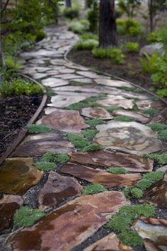 Moss and stone path.