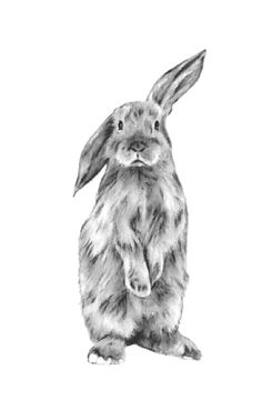 "ORIGINAL Charcoal Bunny drawing, Rabbit Art, Bunny Art, Rabbit Drawing, Bunny Sketch, Nursery Art, Rabbit Sketch - 5""x7"", Charcoal Sketch by JaclynsStudio on Etsy"