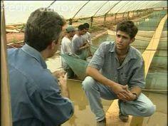 Globo Rural: a tecnologia na criação de peixes - 2004