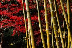 竹のある景