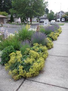 Parking-strip garden a jewel in Hillsboro suburb Sidewalk Landscaping, Front Yard Landscaping, Landscape Design, Garden Design, Cool Landscapes, Garden Spaces, Shade Garden, Garden Planning, Outdoor Gardens