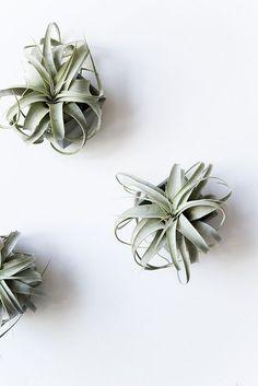 #air #plants