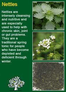 Richard Whelan ~ Medical Herbalist ~ Nettles