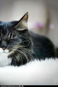 Kitty with a whisker curled into a heart