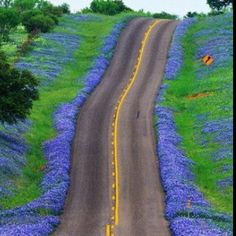 Texas Hill Country Beauty