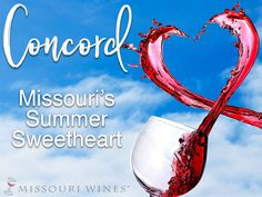 Concord Month in Missouri | MO Wine Concord Grape Jelly, Grape Pie, Missouri Mo, Wine Education, Poached Pears, Wine Pairings, Growing Grapes, Sangria, Wine Country