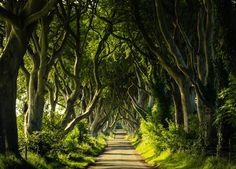 """The Dark Hedges, Irlandia Północna - """"Gra o tron"""""""