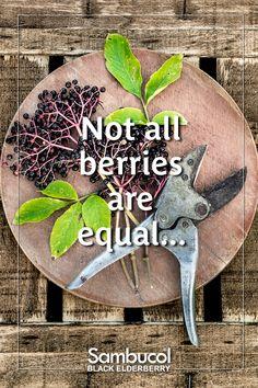 Not all Elderberry is Alike Dark Colors, Different Colors, Elderberry Benefits, Sambucol Black Elderberry, All Berries, Central Europe, How To Stay Healthy, Minerals, Gemstones