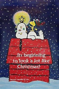 It's beginning to look a lot like Christmas. Snoopy