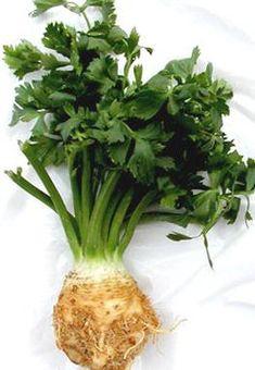 Povedané slovami odborníka: zeler je vynikajúci na potenciu – aj na demenciu. Dnes vás zoznámime s desiatimi NAJ tejto zeleniny vo vzťahu k nášmu zdraviu.
