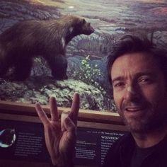 Wolverine and a wolverine (Hugh Jackman)