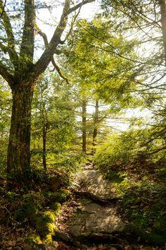 Oh so pretty hiking in #hickoryrun state park, PA. #optoutside #hiking #lifealive #explore #pastateparks #outdoors #spring #green #themountainsarecalling
