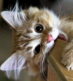 kitten ~ teething