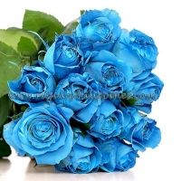 A truly extraordinary gift to give that uniquely special person in your life. Just like rare sapphire, the mesmerizing blue roses arranged in a bouquet will cast a spell on that lucky recipient. 12 Blue Roses Bouquet  You can send your inquiry:  Email us: info@regaloph.com Contact us: +63-02-44-4444 Website: Regaloph http://regaloph.com Facebook: Regaloph.com fan page