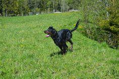 Gårdstunet Hundepensjonat: Deilig fredag - herlig vær og herlige hunder!
